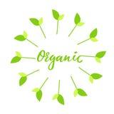 有机手拉的商标,与绿色花卉框架的标签,用新芽 导航例证食物的eps 10并且喝 库存图片
