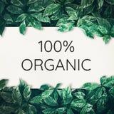 100%有机文本有绿色叶子背景 免版税库存照片