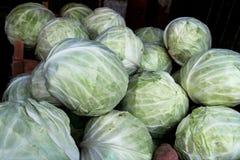 有机新鲜的圆白菜 免版税库存照片