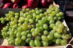 有机新鲜的白葡萄 库存图片