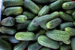 有机新鲜的黄瓜 库存照片
