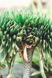 有机概念:植物& x28; 棕榈tree& x29; 免版税库存照片