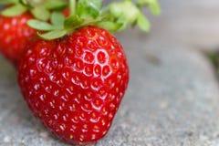 有机生长在摊铺机走道的草莓 免版税库存照片