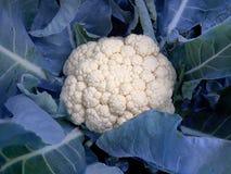 有机的花椰菜 免版税库存照片