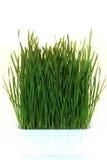 有机的草绿色 免版税库存图片