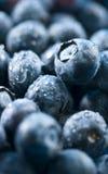 有机的蓝莓 免版税库存图片