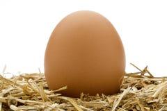 有机的鸡蛋 免版税库存照片