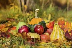 有机红色苹果、南瓜和秋叶在秋天从事园艺 免版税库存图片