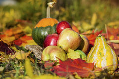有机红色苹果、南瓜和秋叶在秋天从事园艺 免版税库存照片