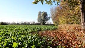 有机耕田在秋天 库存图片