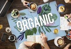 有机耕种新成长自然健康概念 免版税库存照片