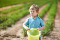有机草莓农场的小男孩 库存图片