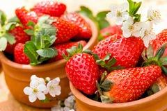 有机草莓-季节性果子 免版税库存照片