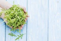 有机蔬菜 健康的食物 火箭沙拉在农夫手上 免版税库存照片