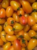 有机蕃茄工匠脸红老虎 库存照片