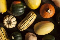 有机被分类的秋天南瓜 库存照片