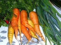 有机被种植的在桌上显示的红萝卜和欧洲防风草 免版税库存图片