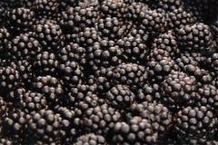 有机被种植的黑莓 免版税库存照片