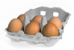 有机装箱的鸡蛋 免版税库存图片