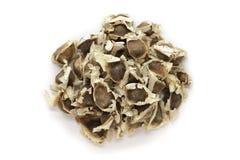 有机辣木科(含油椒木属)种子 免版税图库摄影