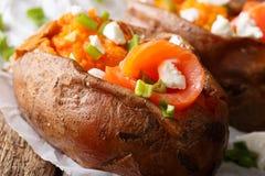 有机食品:用红色鱼和绿色充塞的被烘烤的白薯 免版税图库摄影