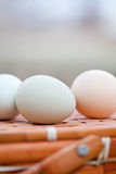 有机鸡蛋坐篮子 免版税图库摄影