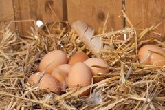 有机鸡蛋 免版税库存照片