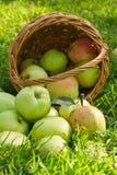 有机绿色苹果从篮子,垂直的图象溢出 库存图片