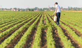 年轻有杀虫剂的农夫喷洒的大豆种植园 免版税图库摄影