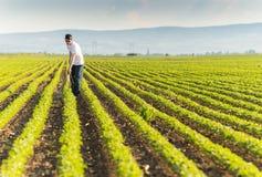 年轻有杀虫剂的农夫喷洒的大豆种植园 库存图片