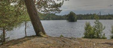 有杉木的Forest湖在HDR 图库摄影
