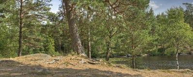 有杉木的Forest湖在HDR 免版税图库摄影