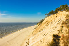 有杉树和沙子的湖 免版税库存图片