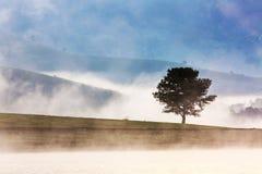 有杉树的Suoi Vang湖早晨 库存图片