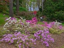 有杜娟花的山坡庭院 免版税库存图片