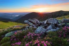 有杜鹃花花的草坪在大石头中的 与日出的山风景与有趣的天空和云彩 免版税库存图片