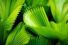 有条纹图形的绿色叶子在阳光下 免版税库存照片