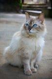 有来历猫画象  图库摄影
