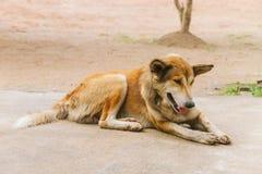 有来历老可怜和病的街道的狗- 免版税图库摄影