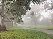有林木线和大雾的,墨尔本蠕动的黑暗的自行车道路 免版税库存照片