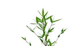 有枝杈的热带竹叶子在白色被隔绝的背景 免版税库存图片