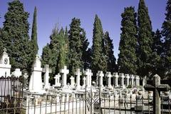 有柏的墓地 库存照片