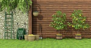 有柠檬树的庭院 库存图片