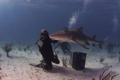 有柠檬鲨鱼的潜水者 免版税库存图片