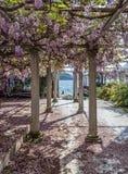 有柱子和紫藤的松弛前院开花 免版税库存照片