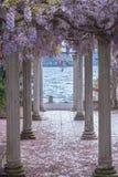 有柱子和紫藤的美好的前院开花 库存照片
