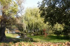 有柳树和树的在湖岸,捷克,欧洲公园 图库摄影