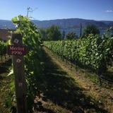 有标志墨尔乐红葡萄酒的葡萄园1996年 免版税库存图片