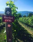 有标志特写镜头的葡萄园  墨尔乐红葡萄酒1996年 库存照片