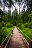 有栏杆的一个木桥在湖Synevir附近的一条小小河 carpathians 乌克兰 免版税库存照片